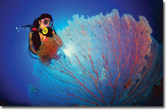 Snorkelling in Cairns Barrier Reef Concept Voyages