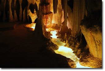 Glow Worm Cave in Gold Coast Concept Voyages