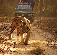 Jungle Safari in Kanha National Park, Madhya Pradesh
